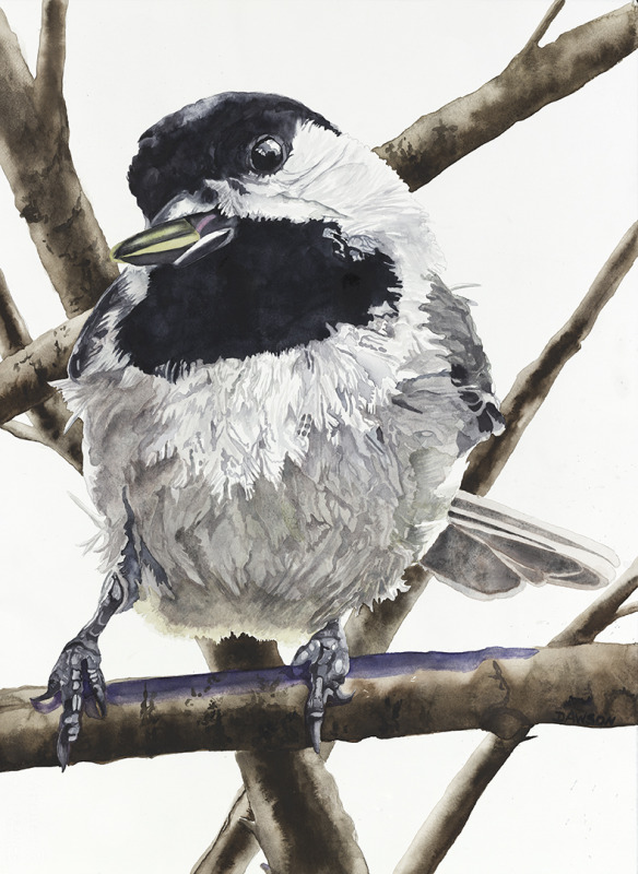 Chickadee: Sunflower Seed