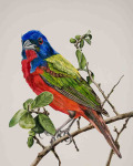 Party Bird: Painted Bunting